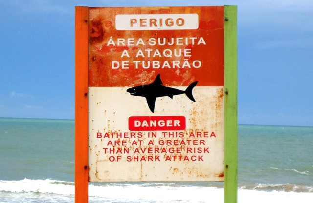Are There Sharks in Brazil?